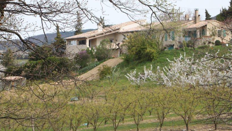 Les champs d'abricotiers au pied de la maison d'hôtes