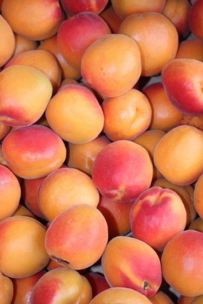 Les abricots des vergers de la Bouligaire que vous pouvez déguster à volonté